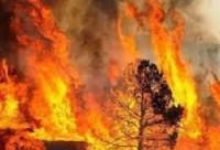 Generic wildfire